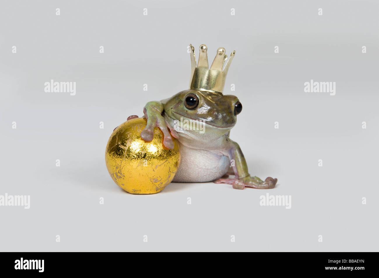 The frog prince and gold ball, studio shot - Stock Image