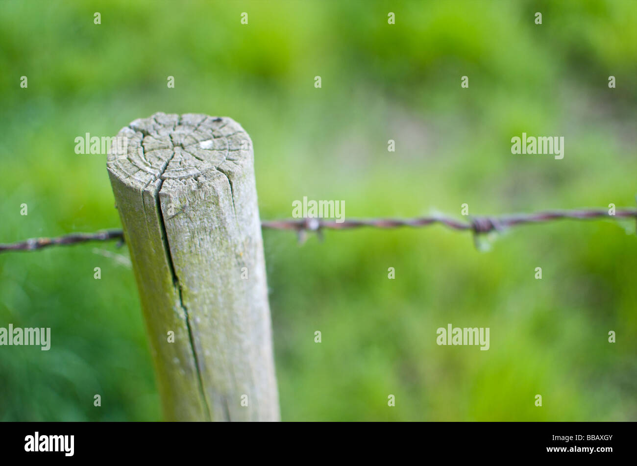 A fence post with barbed wire at the edge of a field. Close up shot with shallow depth of field. - Stock Image