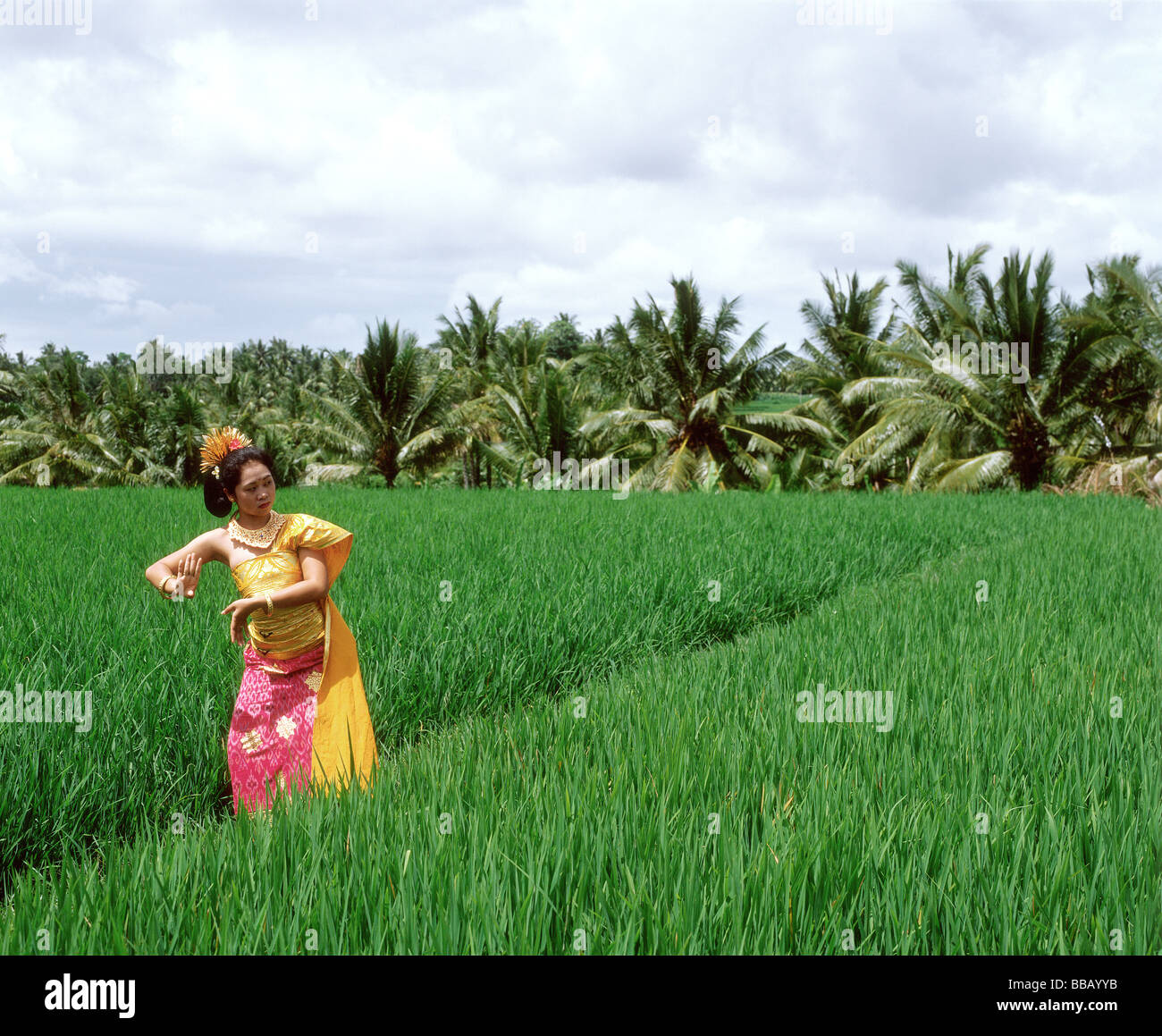 indonesia bali balinese dancer in padi fields trees in background stock photo alamy https www alamy com stock photo indonesia bali balinese dancer in padi fields trees in background 24213039 html