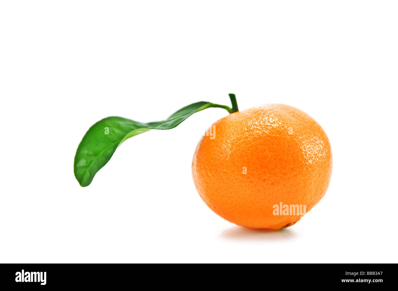 mandarin isolated on white - Stock Image