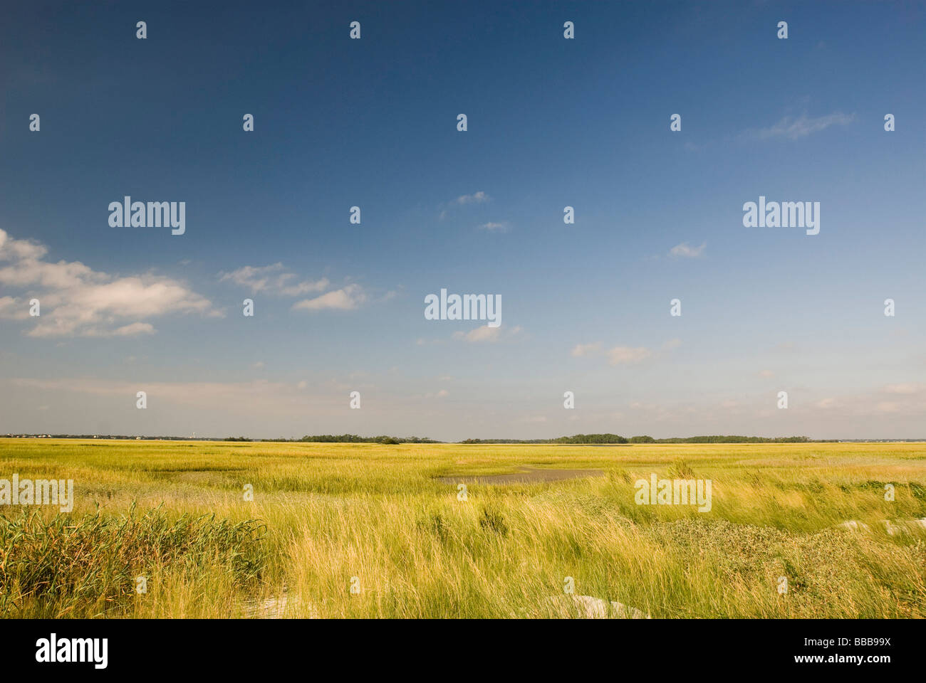 beach marsh in south carolina - Stock Image