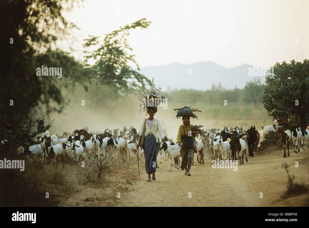 Myanmar (Burma), Bagan, Local women leading herd of goats. - Stock Image