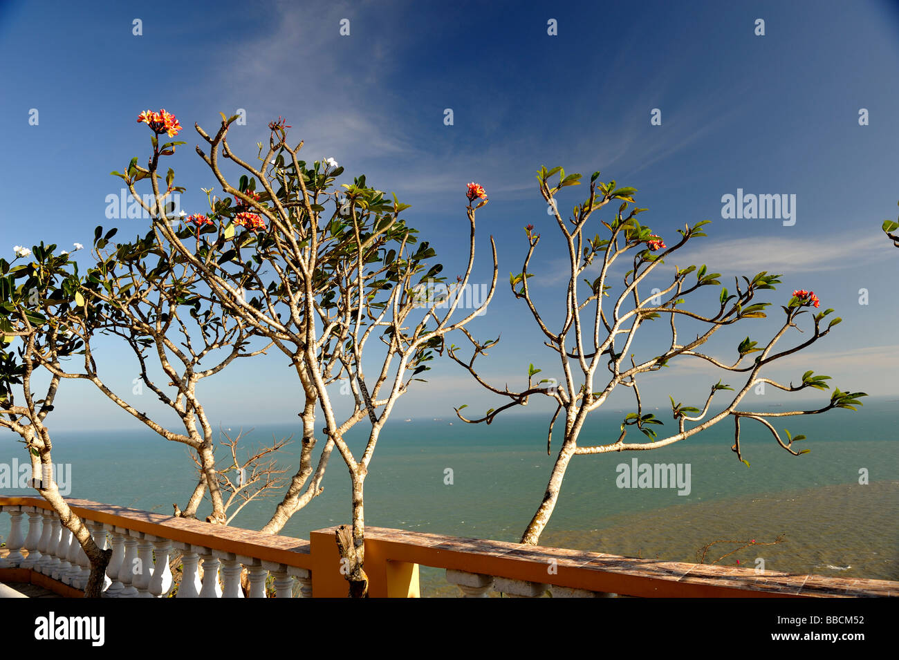 Frangipani trees and balcony overlooking the South China Sea. Vung Tau, Vietnam - Stock Image