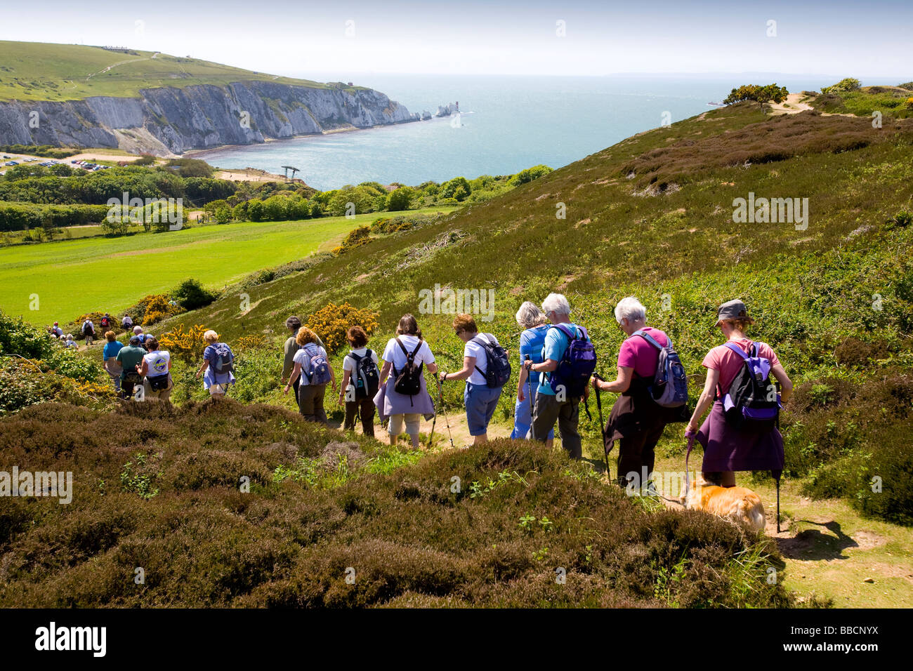 Tennyson Down Needles Headon Warren Isle of Wight Walking Festival Totland - Stock Image