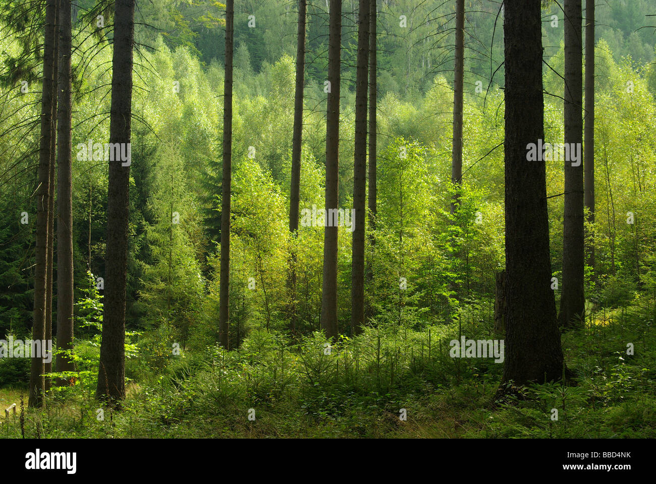 Wald forest 41 - Stock Image