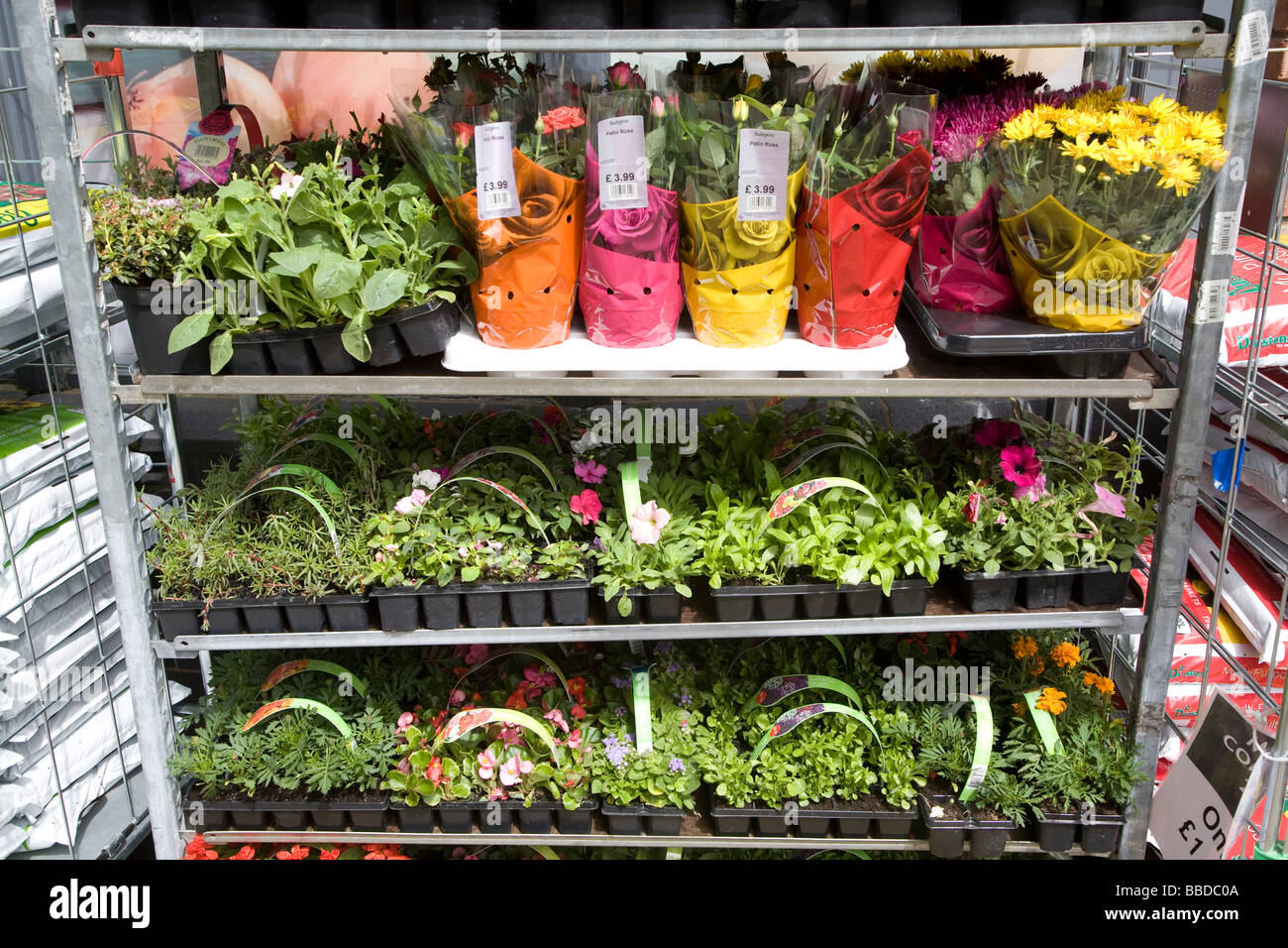 Selection of potted plants on display - Stock Image