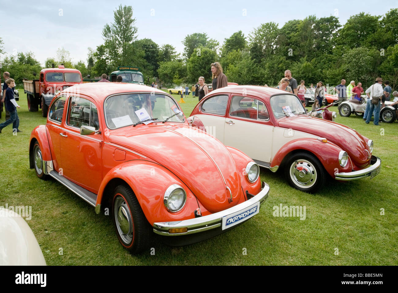 A pair of Volkswagon Beetles on display at Wallingford Classic car Rally, Oxfordshire, UK - Stock Image