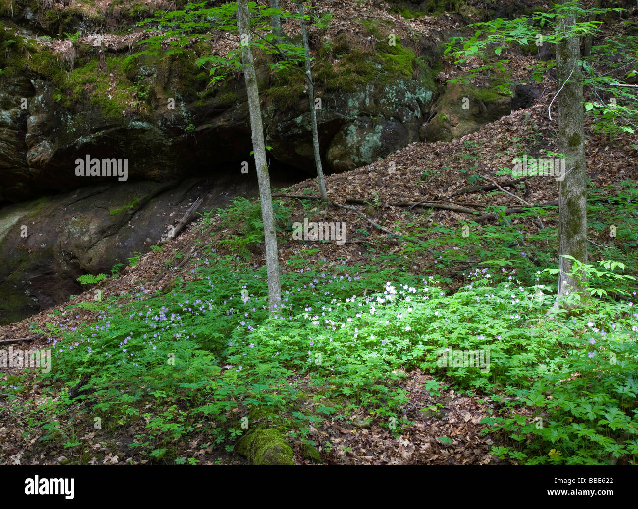 Lost Valley, Governor Dodge State Park, Wisconsin - Stock Image