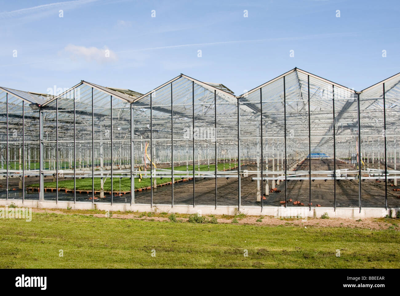 glasshouse greenhouse glass house green houses food production intensive farming farmed farms agriculture summer - Stock Image