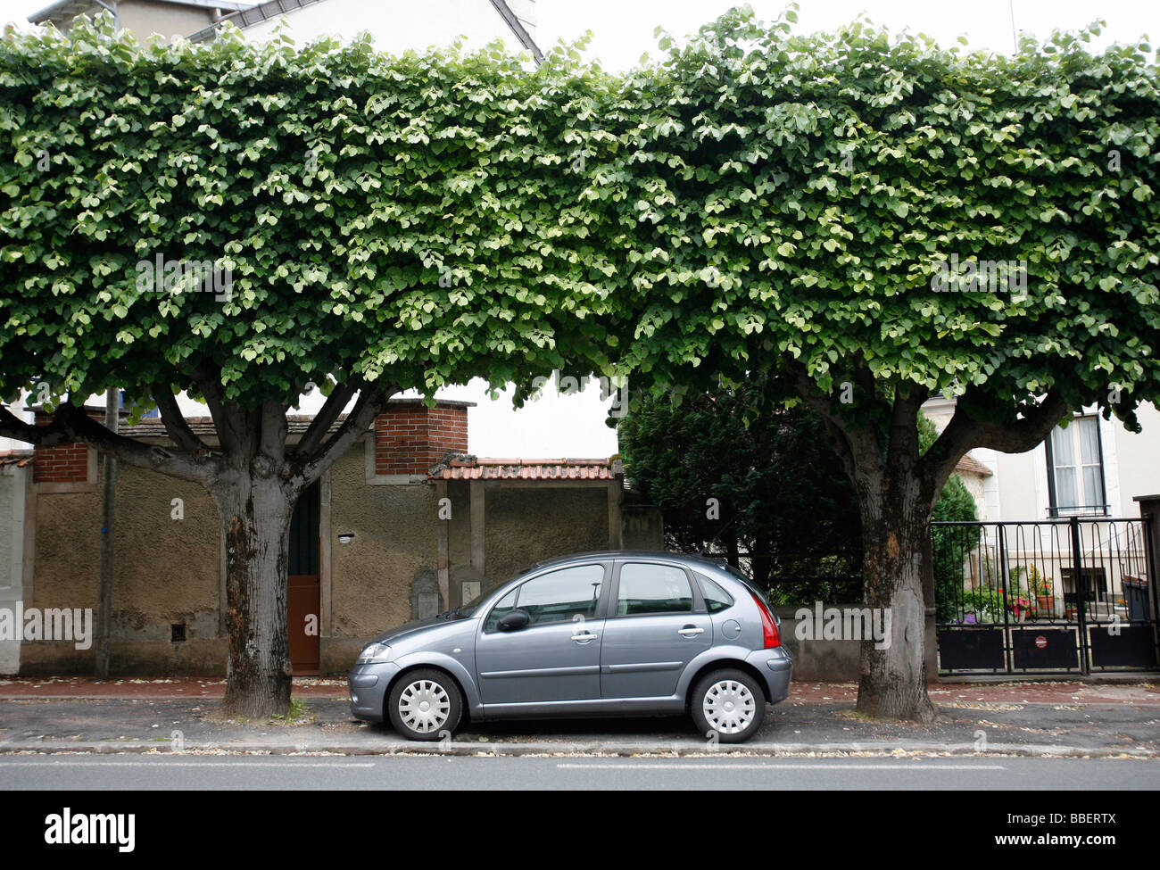Parked car, tree lined street, Fontainebleau, France - Stock Image