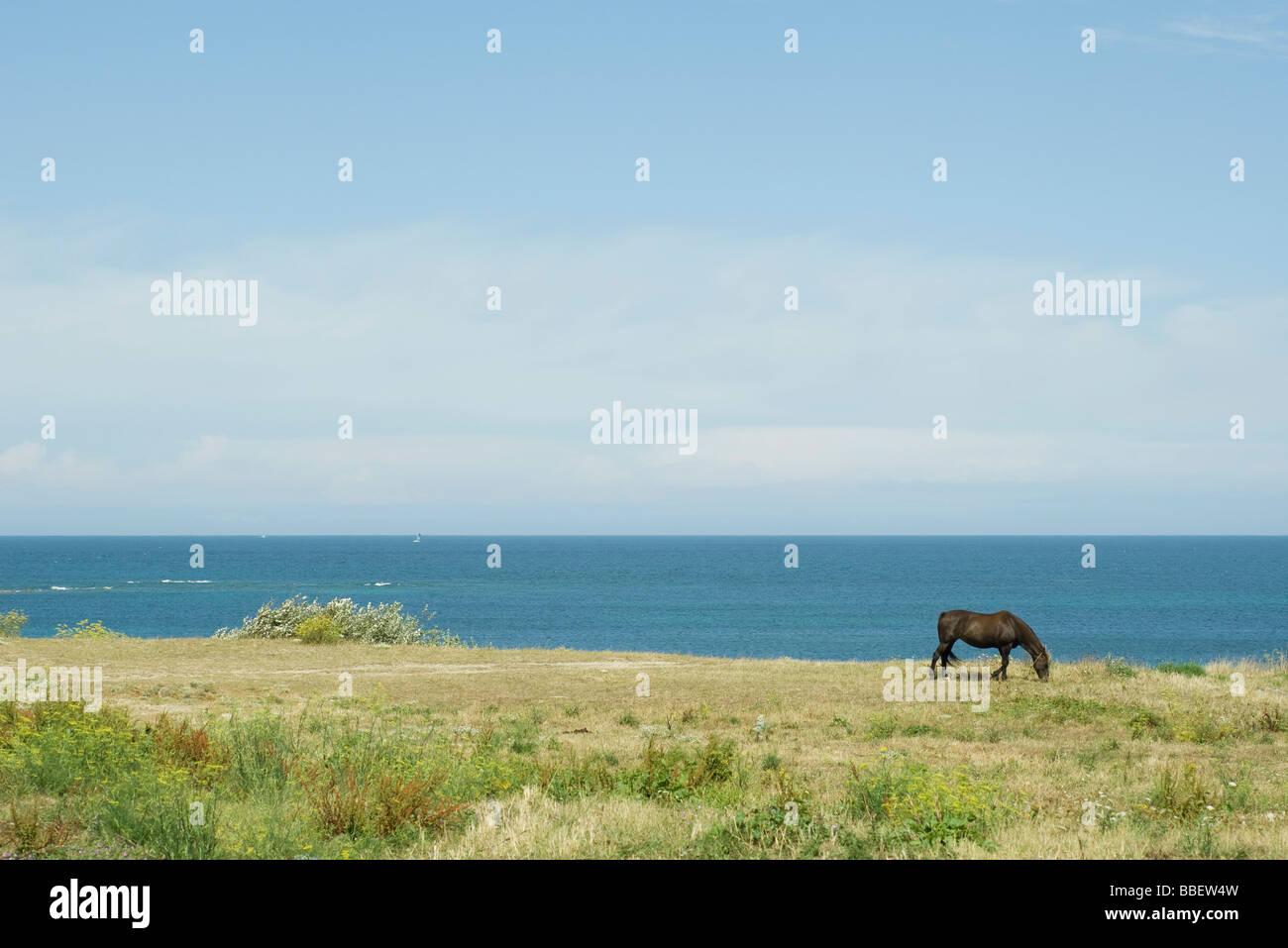 Horse grazing in coastal scene - Stock Image