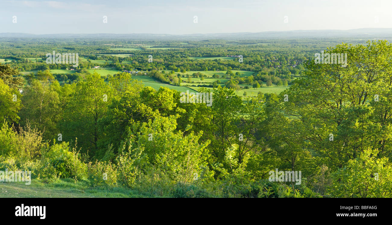 View south from Holmbury Hill, Surrey, UK - Stock Image