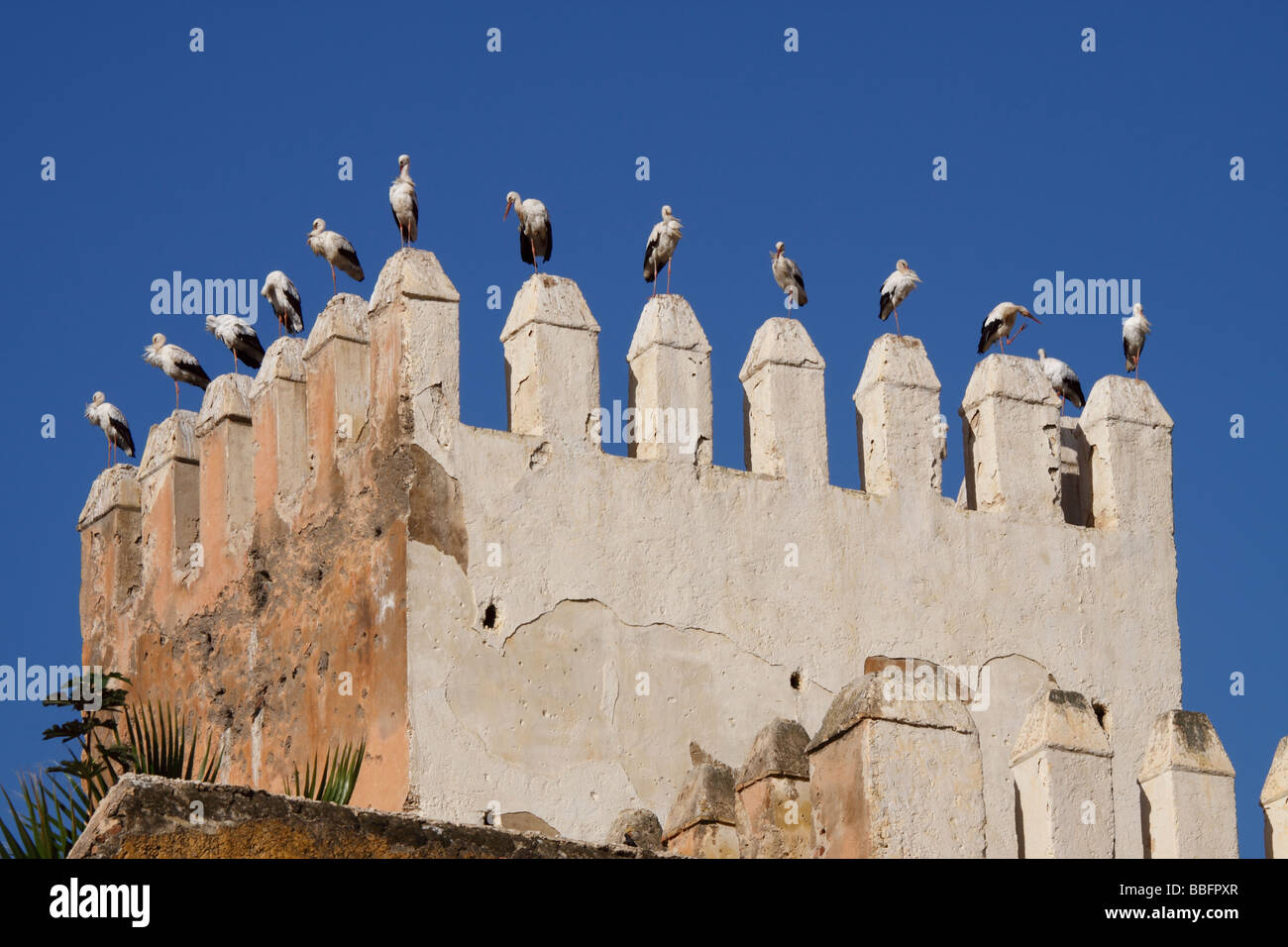 Africa, North Africa, Morocco, Fes, Fès el-Jdid, Petit Mechouar, Bab Makina, Fortress, Tower, Perched Birds - Stock Image