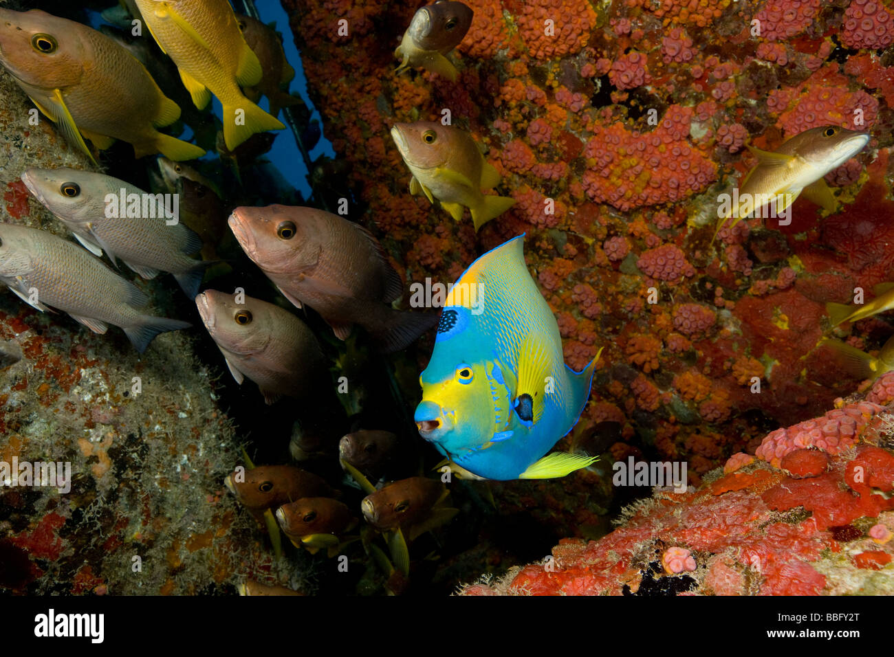 Structure attracts marine life. - Stock Image
