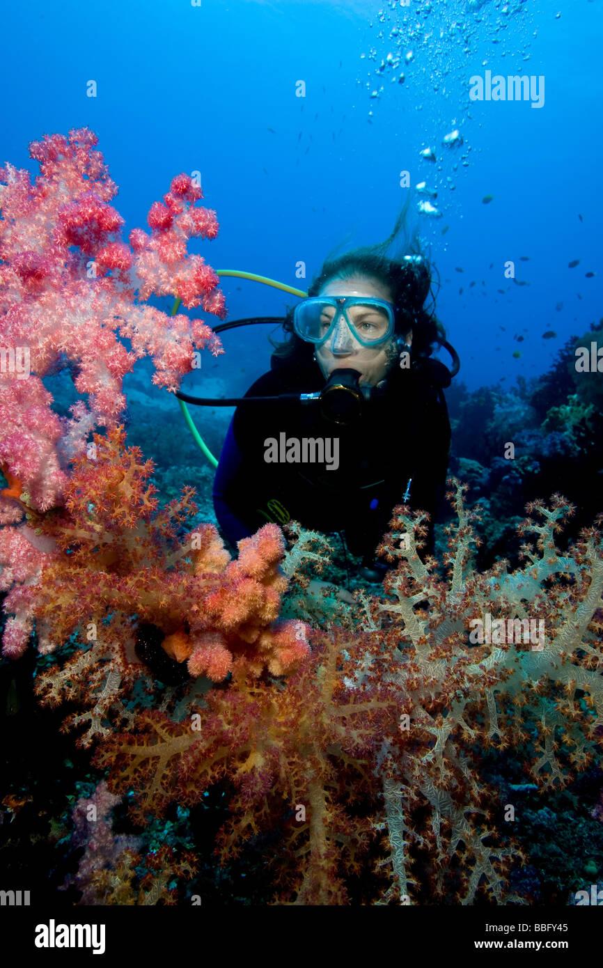 Scuba diver amid soft corals. - Stock Image