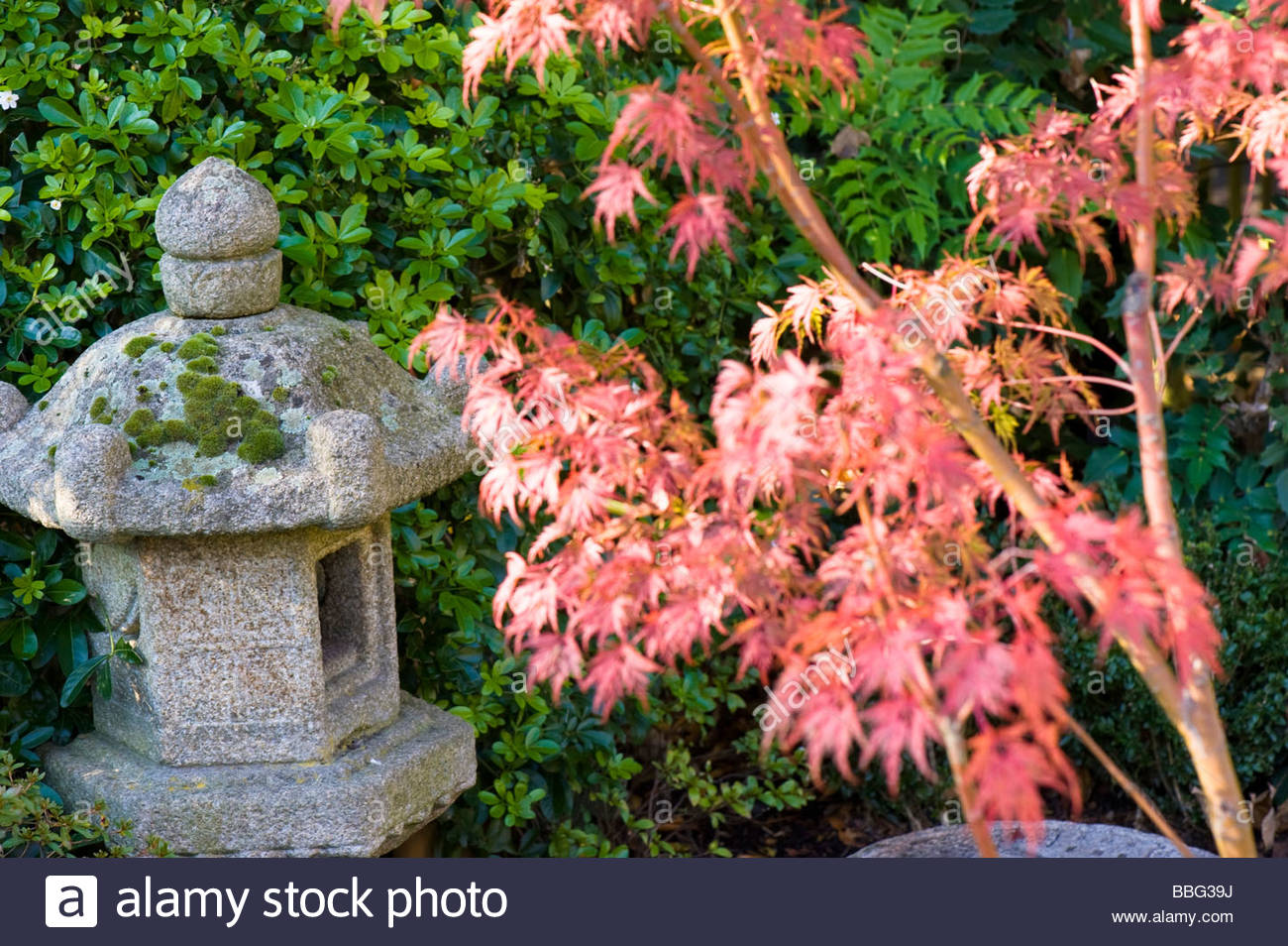 Autumn Colours In The Kyoto Garden, Holland Park, - Stock Image