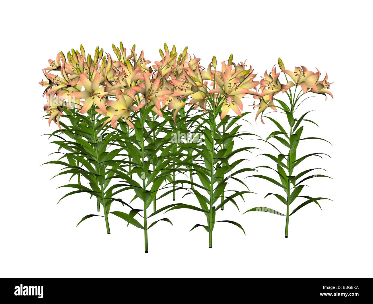 Illustration of an asiatic lily raytraced image - Stock Image