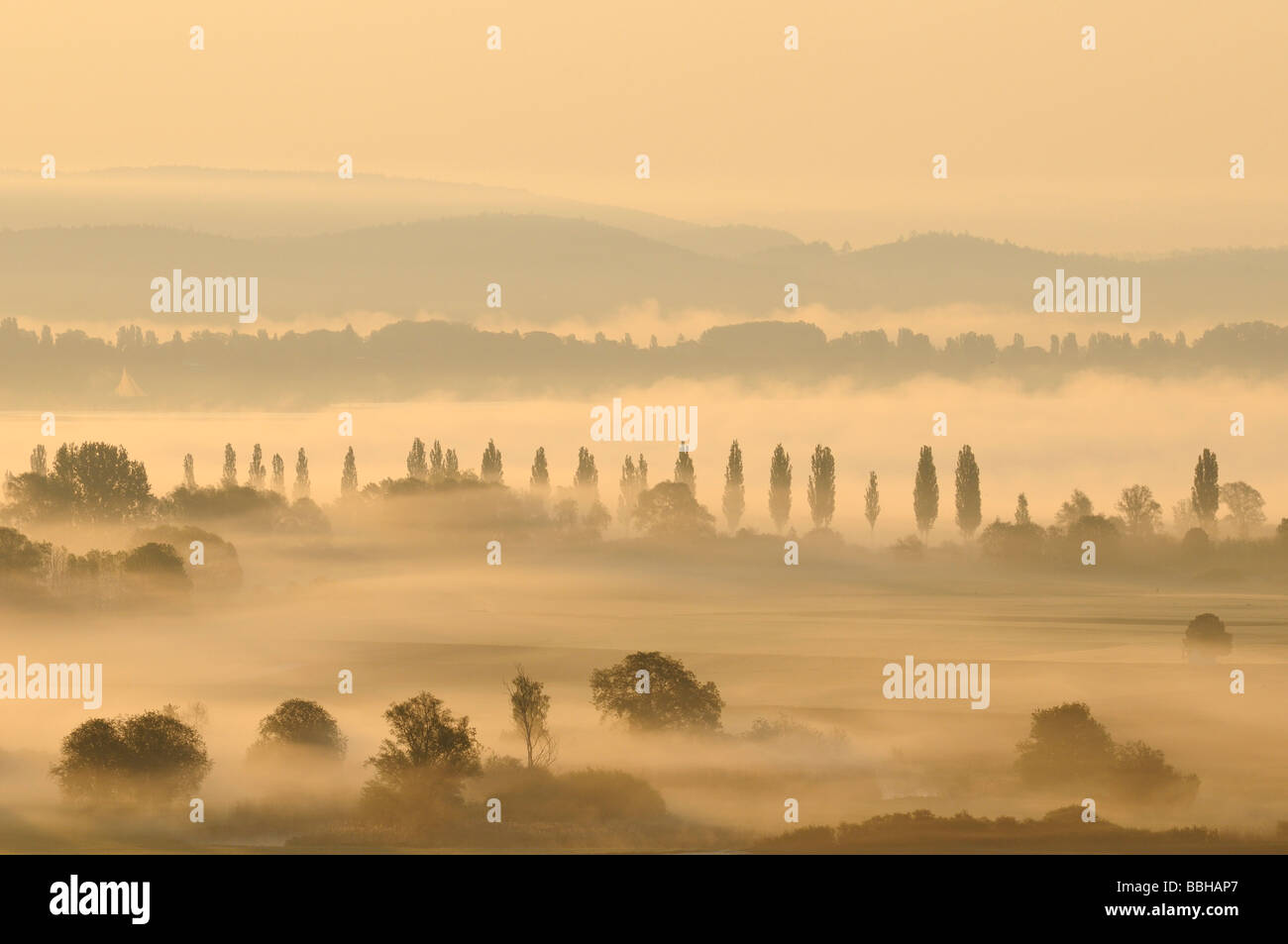 Morning mist in Radolfzeller Aachried, county of Constance, Baden-Wuerttemberg, Germany, Europe Stock Photo