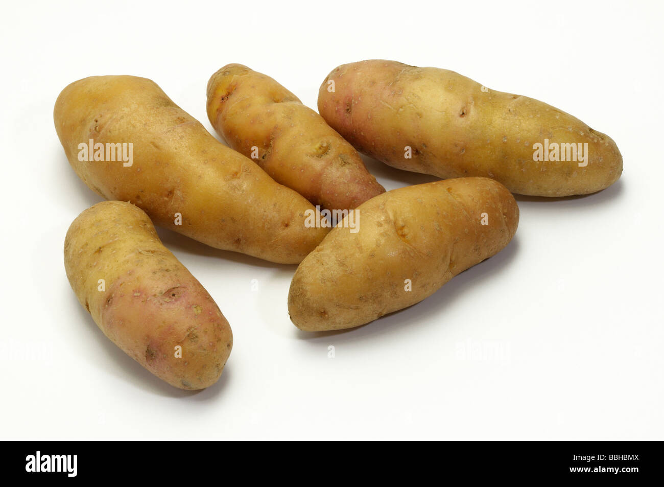 Potato (Solanum tuberosum), variety: Bamberger Hoernchen, studio picture Stock Photo