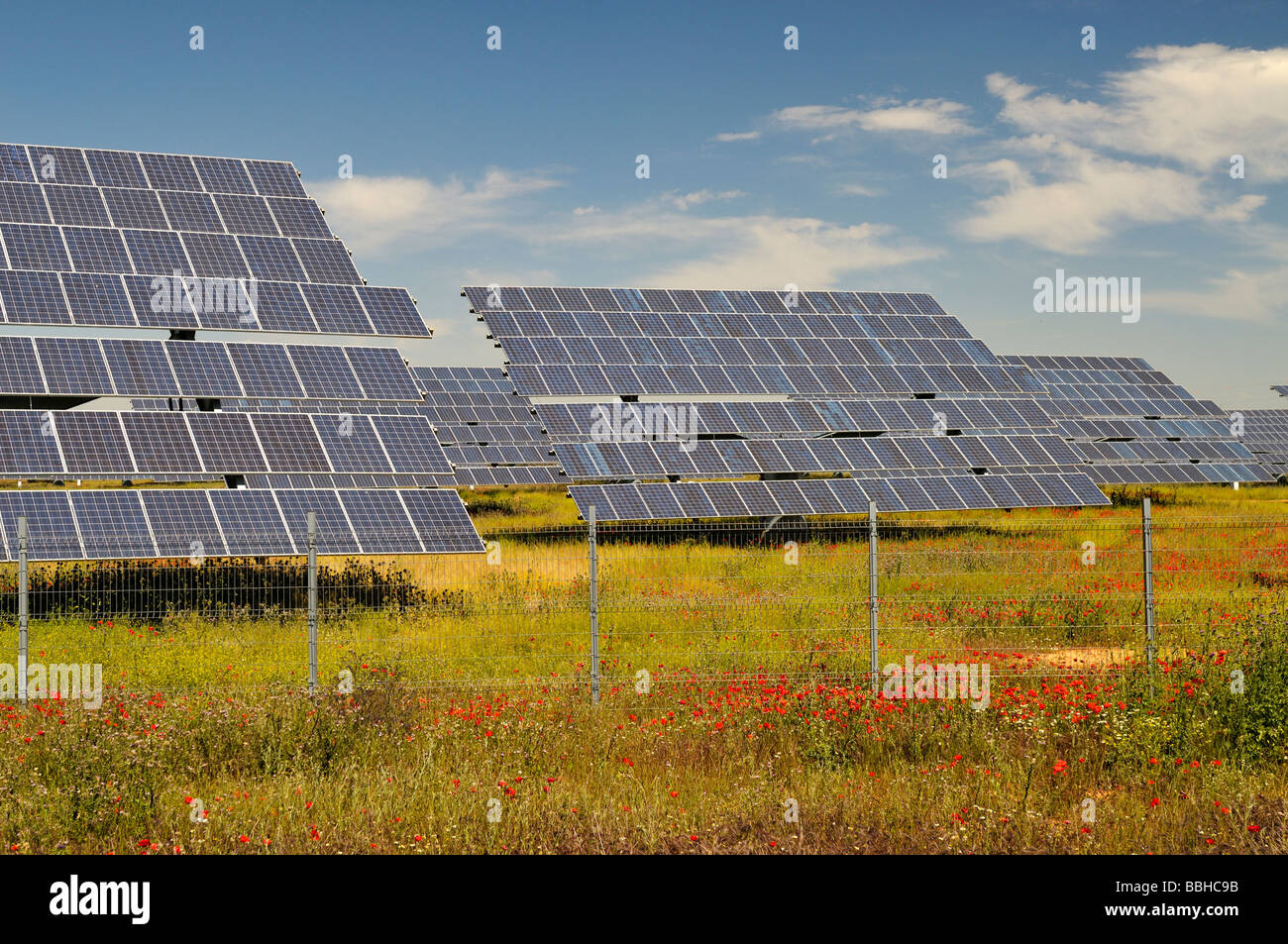 Field with red poppies and many arrays of solar panels for electricity production - Stock Image