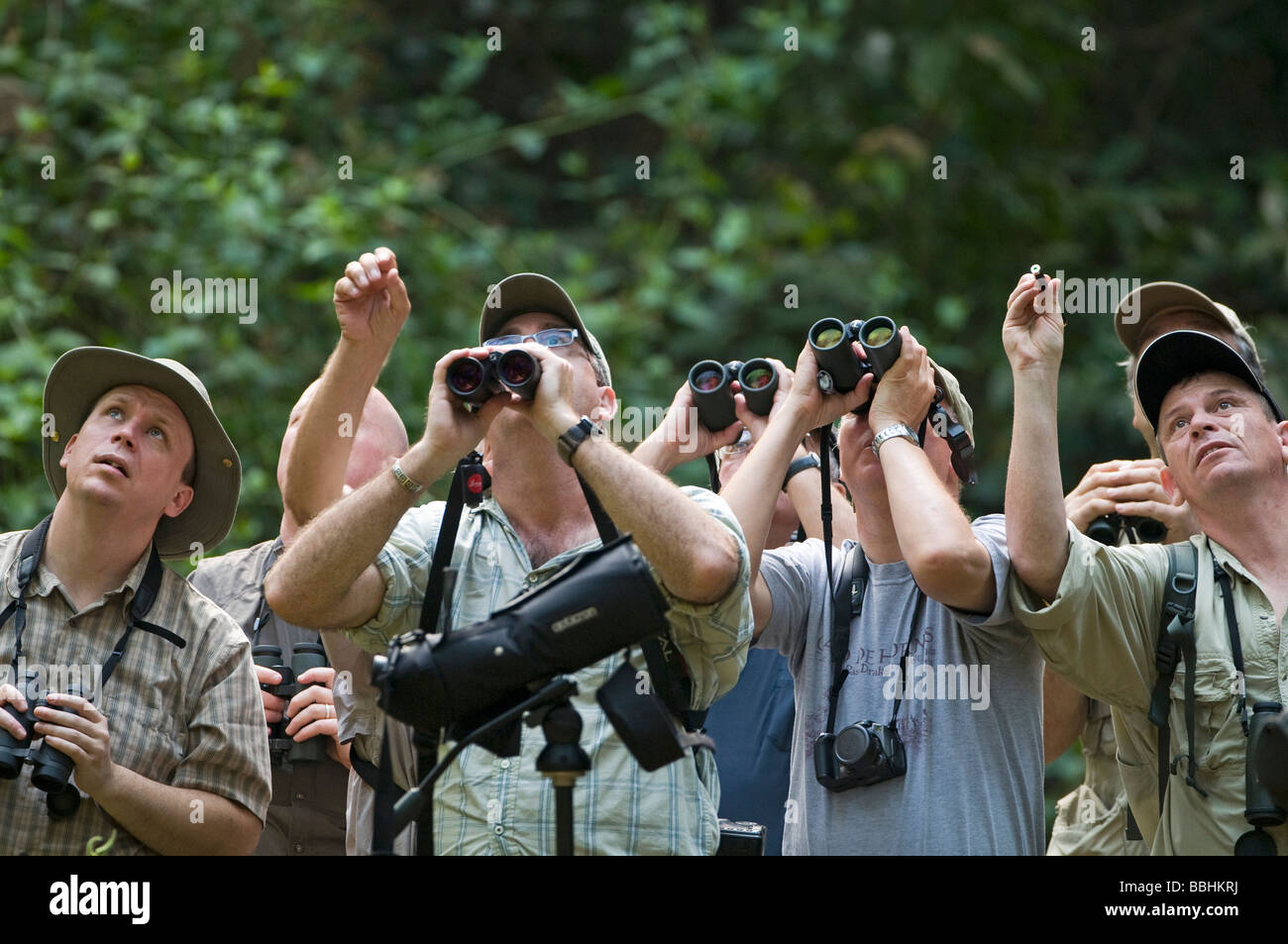 Forest birding in Subic Luzon Philippines - Stock Image