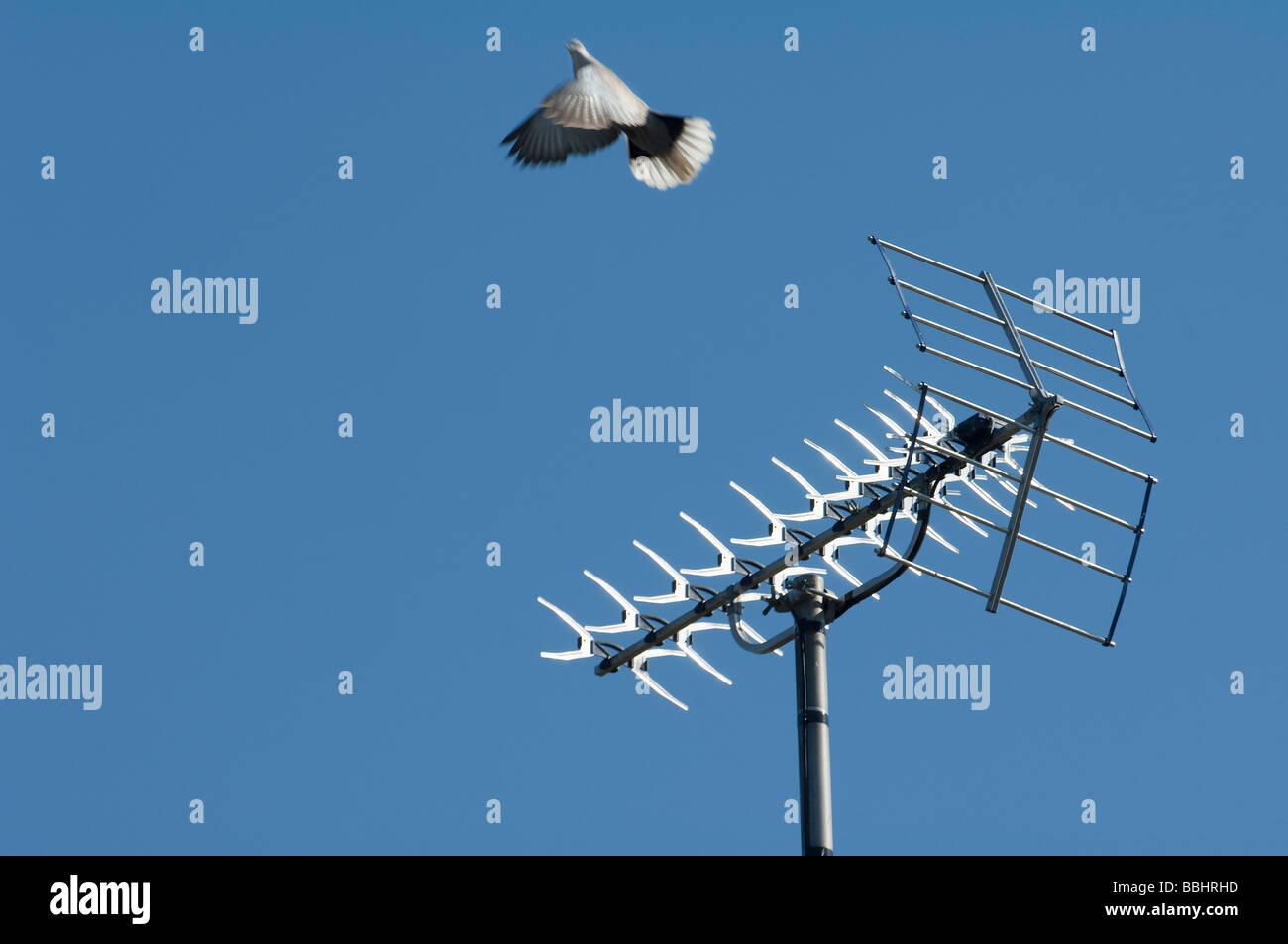 Digital TV Ariel Blue Sky Pigeon Flying - Stock Image