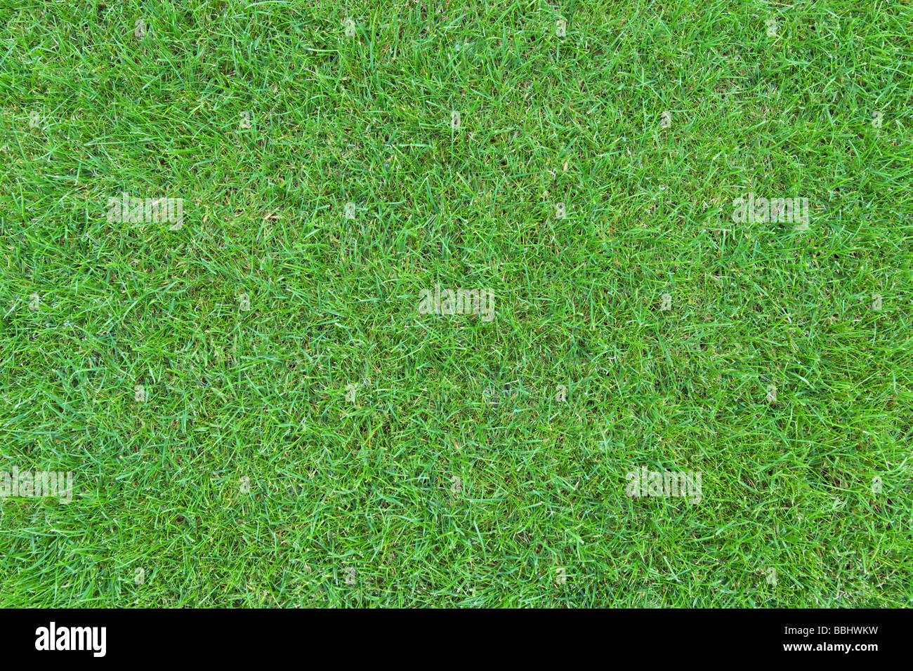 Green grass lawn top view - Stock Image