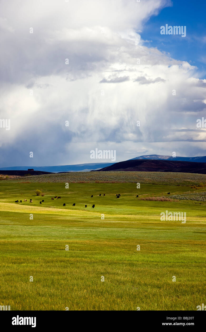 Springtime view southeast of ranchland towards the Sawatch Range of mountains and clearing stormy skies Colorado - Stock Image