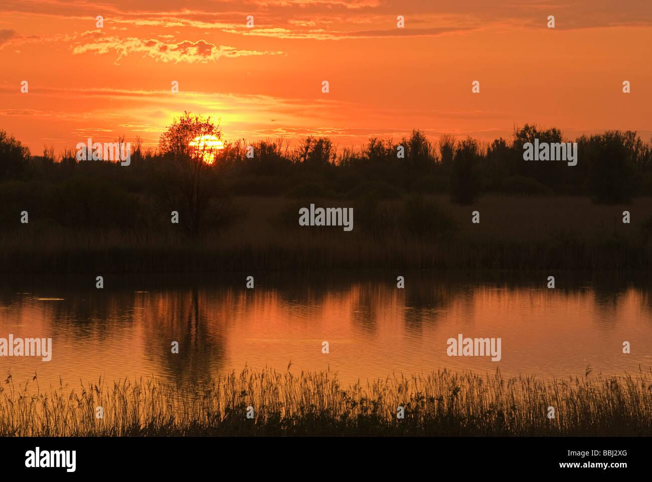 Oostvaardersplassen, Netherlands - Stock Image