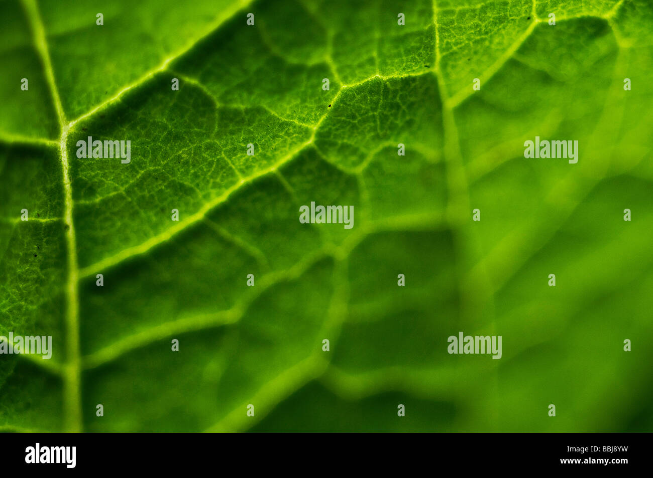 Macro leaf - Stock Image
