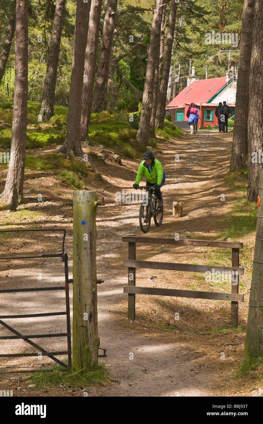 dh Cairngorms National Park ROTHIEMURCHUS SCOTLAND Scottish cycling mountain biking dog activities woodland bike ride aviemore girl uk outdoors Stock Photo