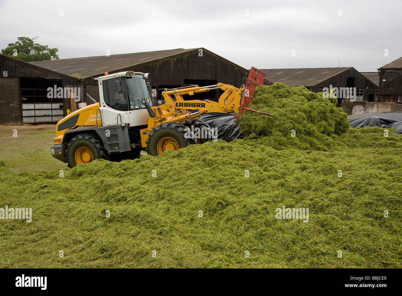 Loader working in a silage clamp - Stock Image