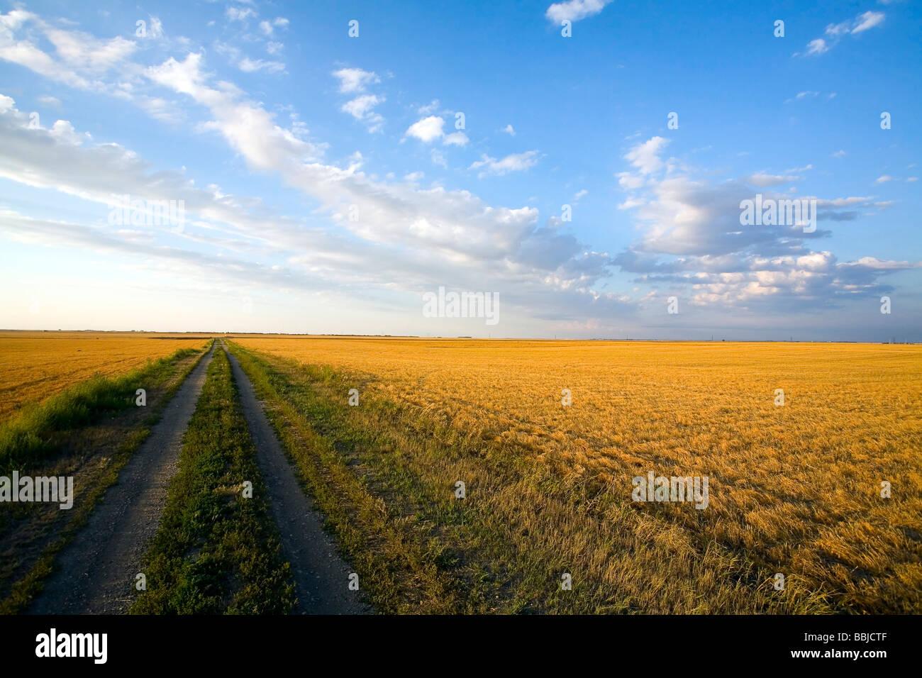 Trail in stubble field, Saskatchewan - Stock Image