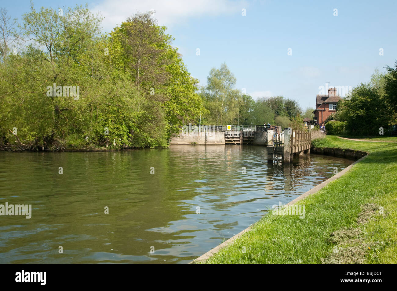 Lock and Lock Keeper s cottage on the River Thames at Abingdon Oxfordshire Uk - Stock Image
