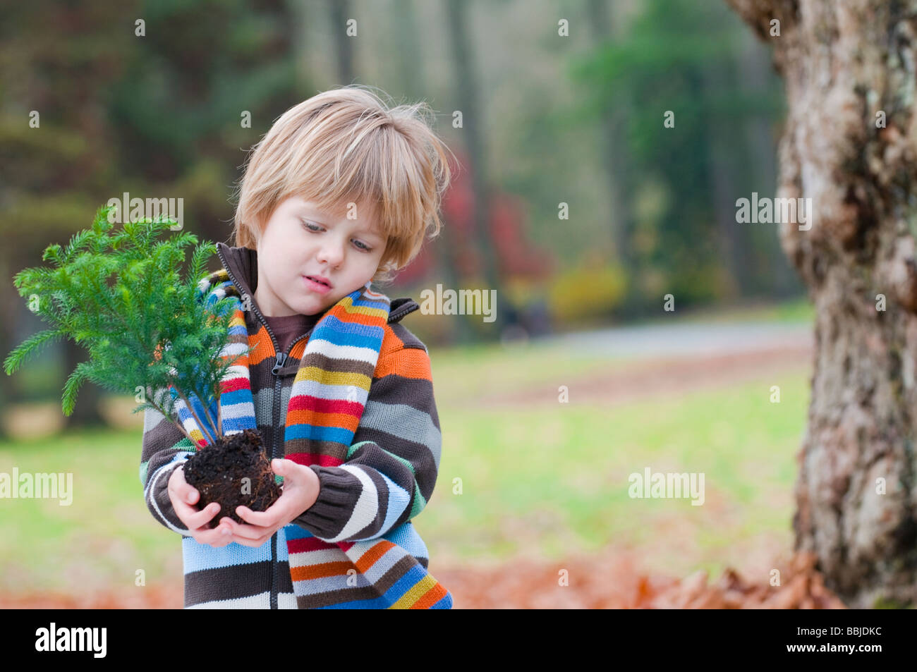 Young boy holding small tree ready to plant, Vancouver, British Columbia Stock Photo