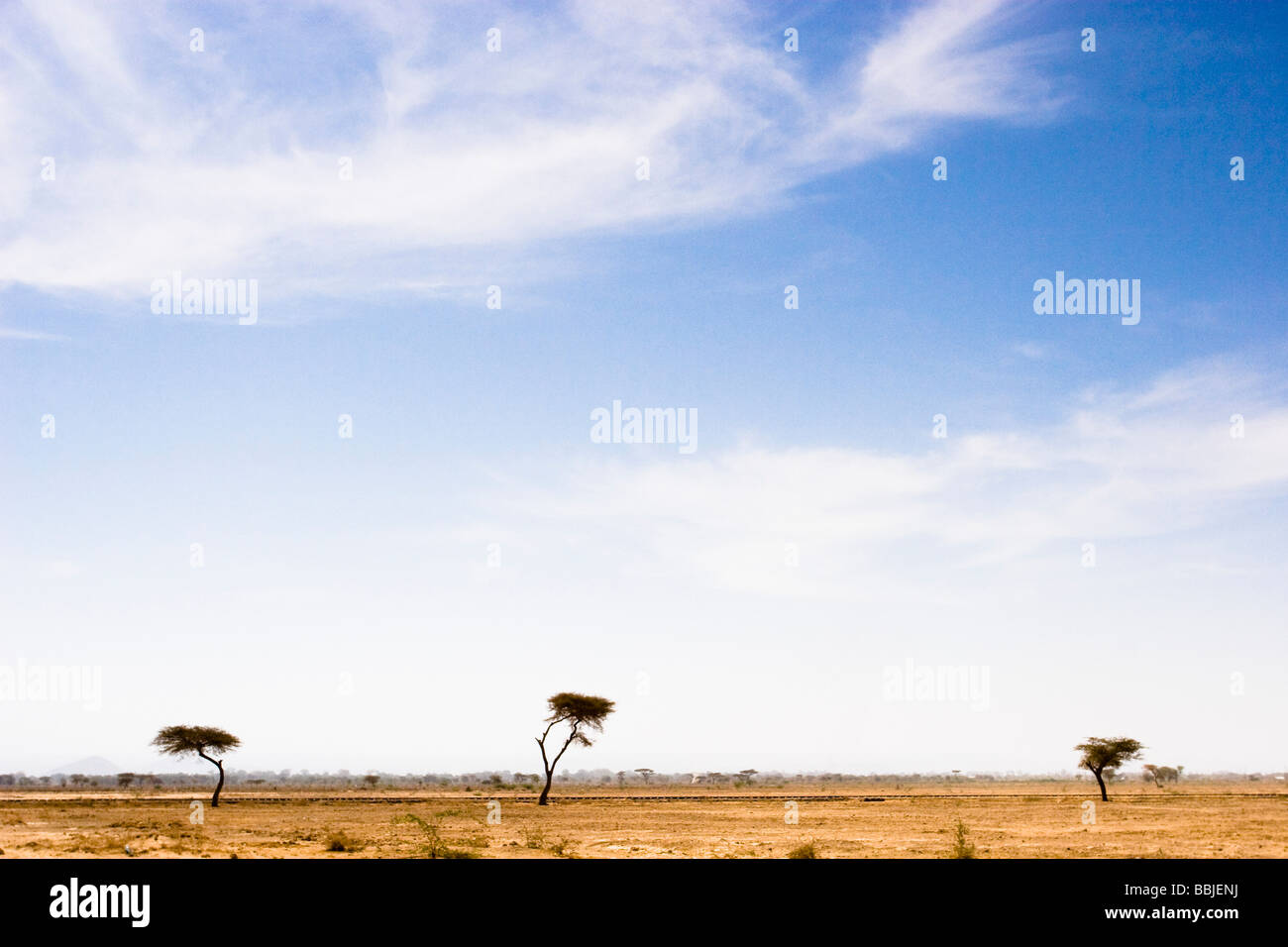 Ethiopia; Scenic view of lone trees on plain - Stock Image