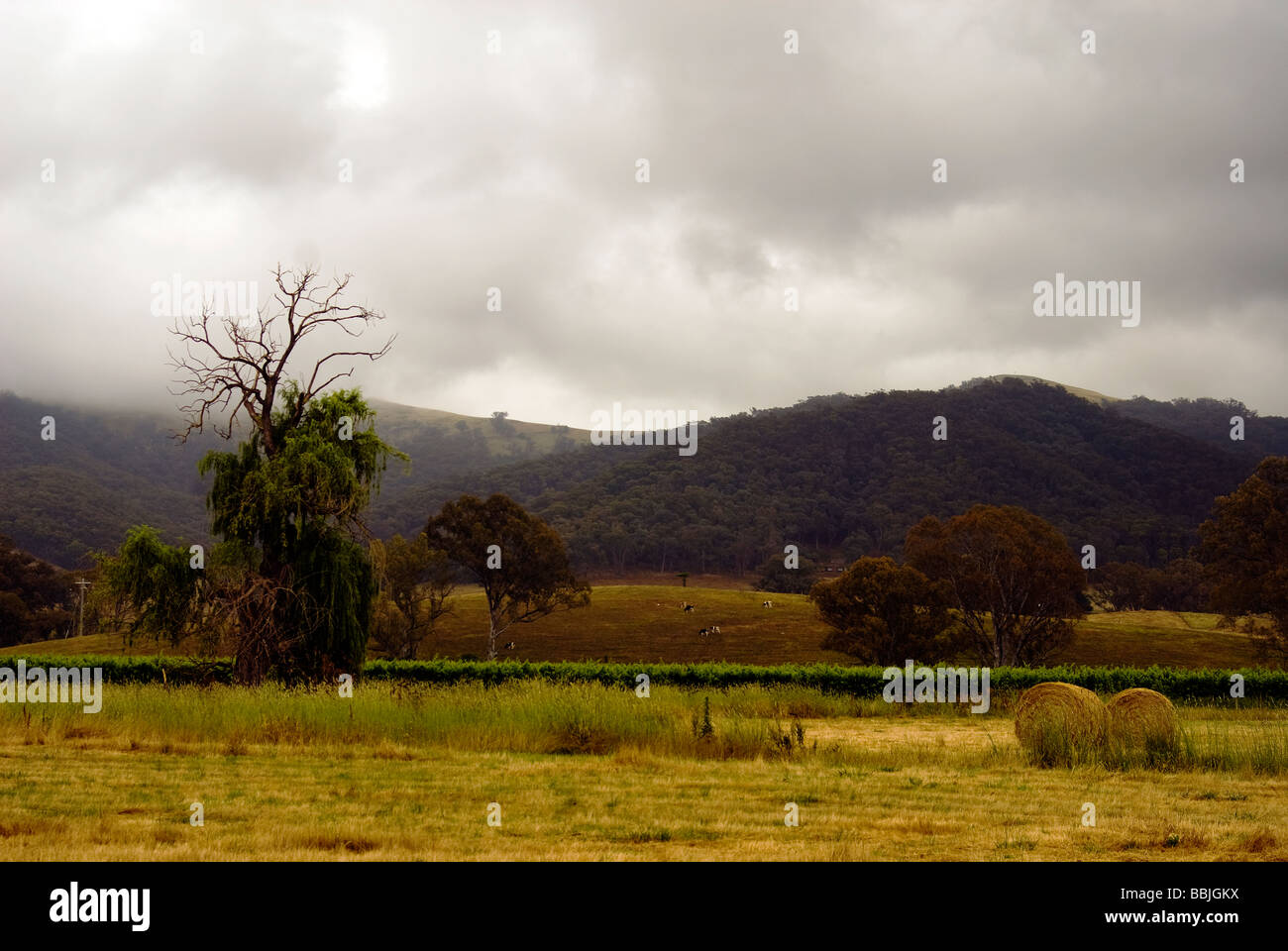 King Valley Morning - Stock Image