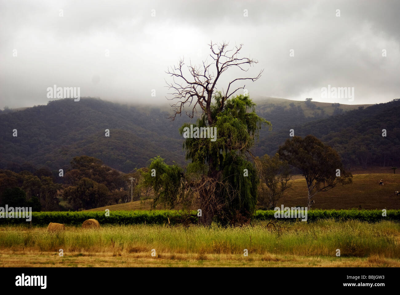 Clearing mist in King Valley - Stock Image