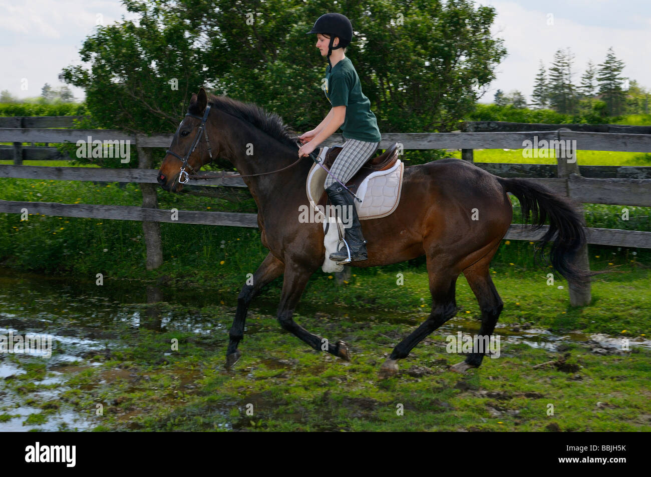 Girl riding into a puddle on a bay thoroughbred horse at a canter - Stock Image