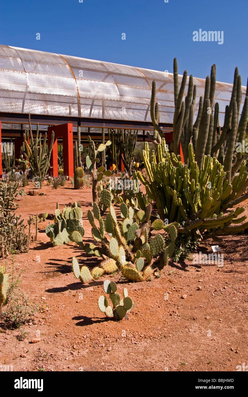 Arizona Phoenix Desert Botanical Gardens cactus garden Papago Park ...