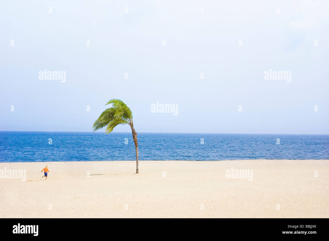 Child running on Sandy Beach towards Ocean with One Palm Tree Stock Photo