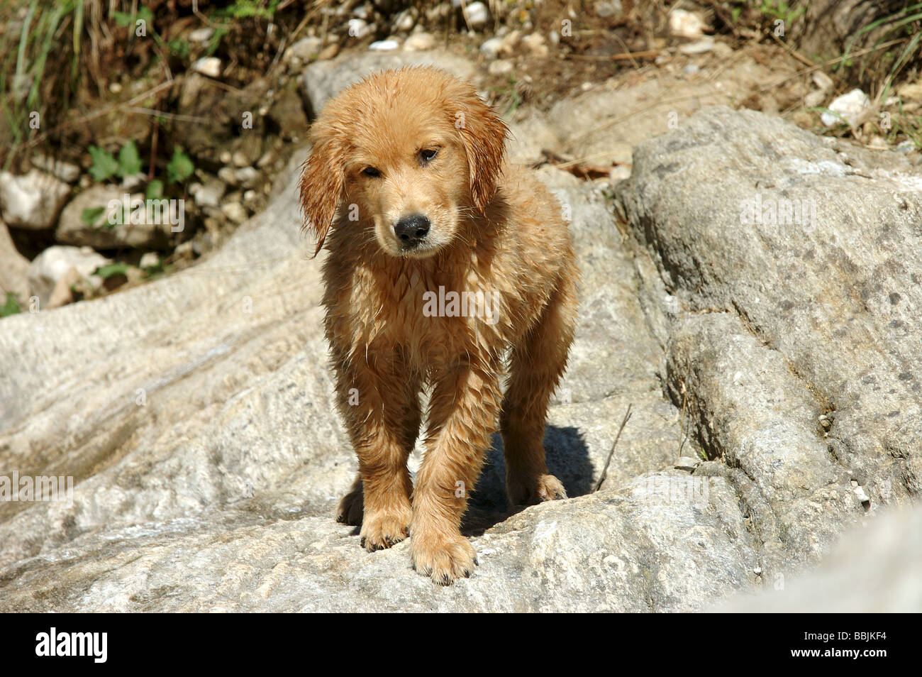 Image result for wet puppy