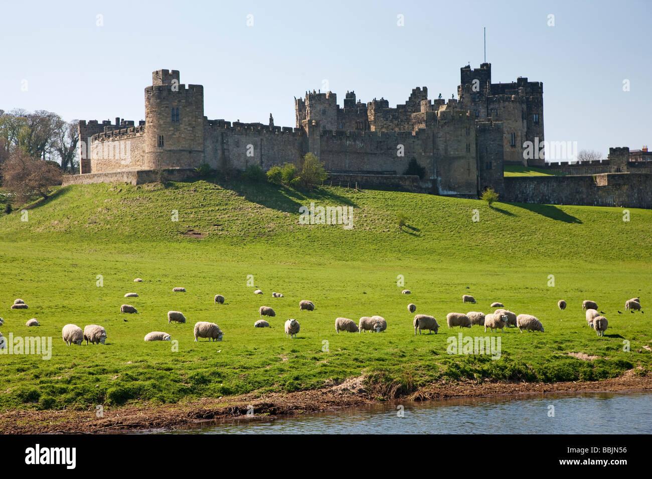 Alnwick Castle Northumberland - Stock Image