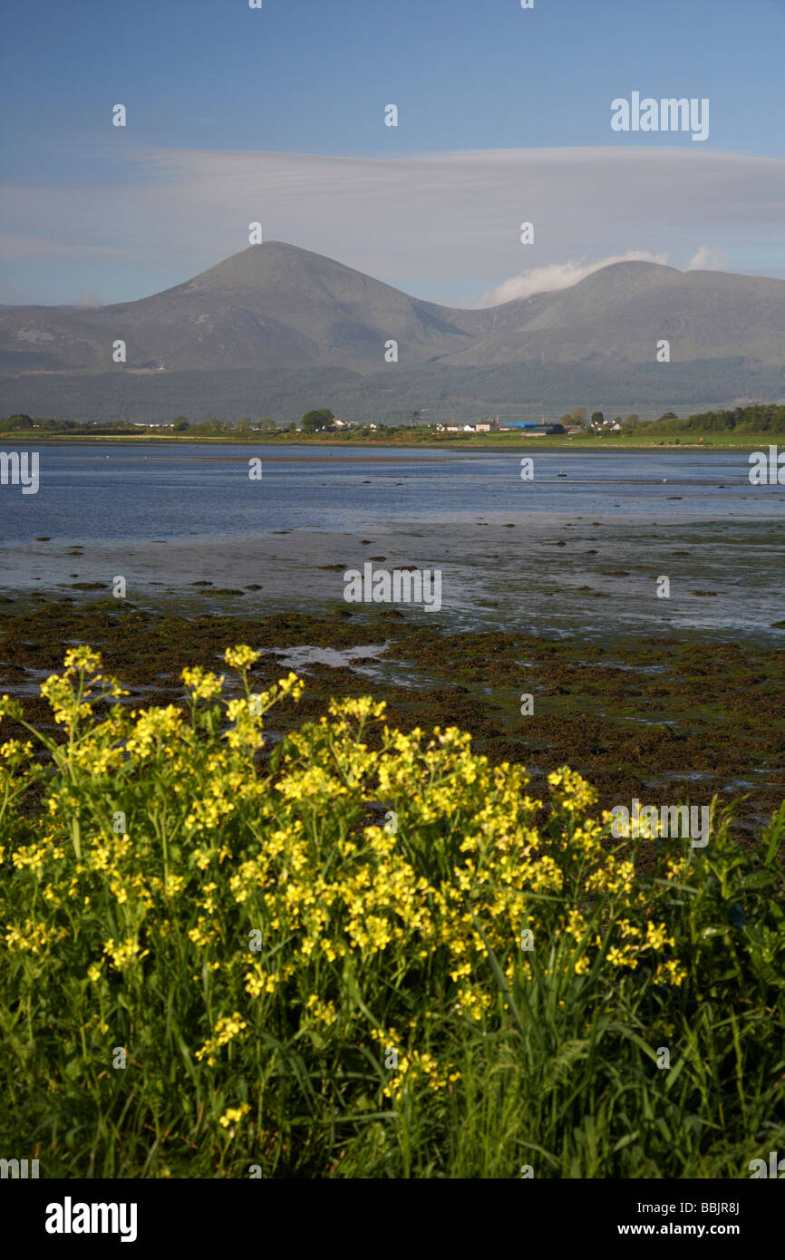 shoreline at murlough nature reserve with the mourne mountains in the background county down northern ireland - Stock Image