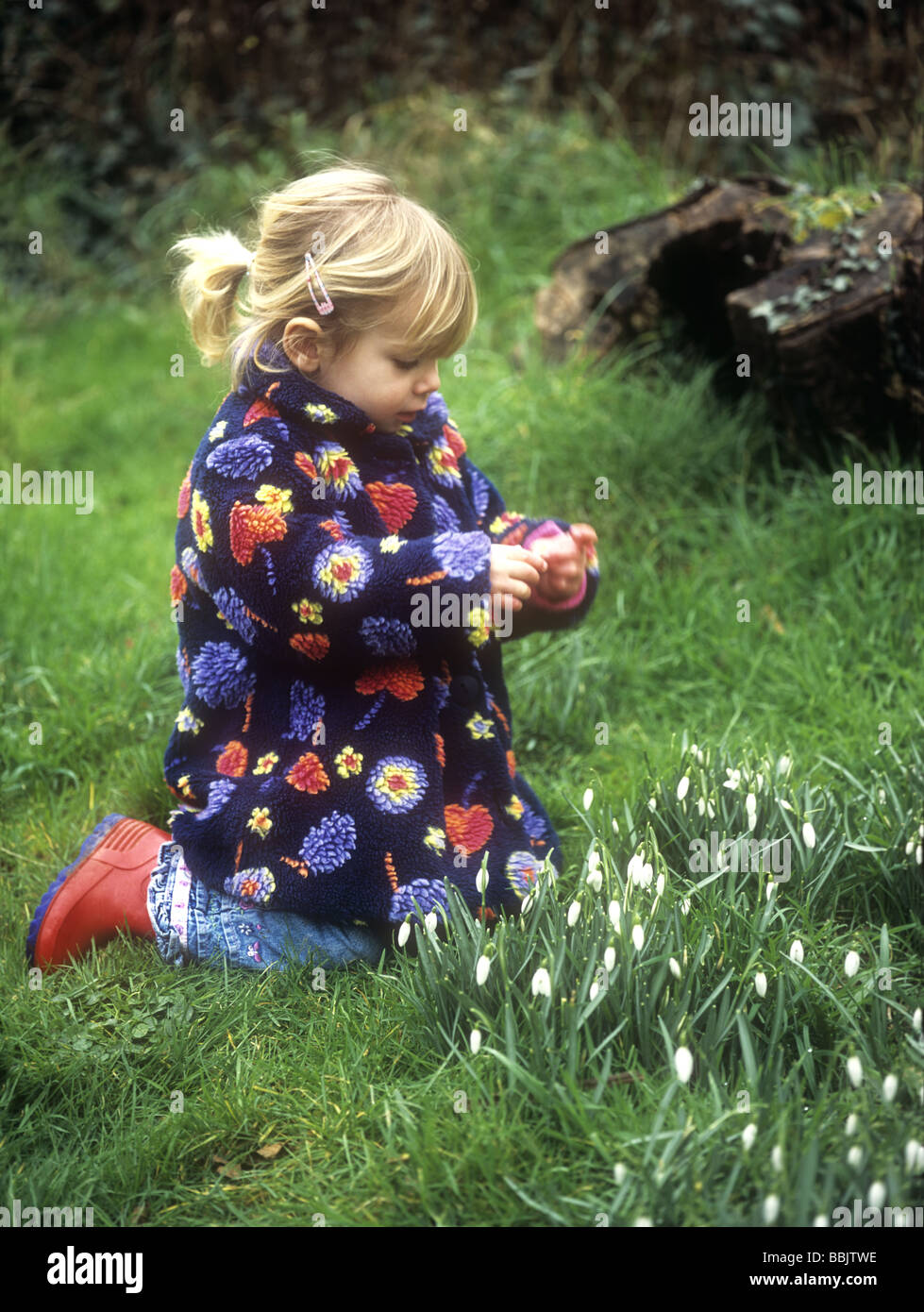 Toddler looking at snowdrops in a garden, Cornwall, UK - Stock Image
