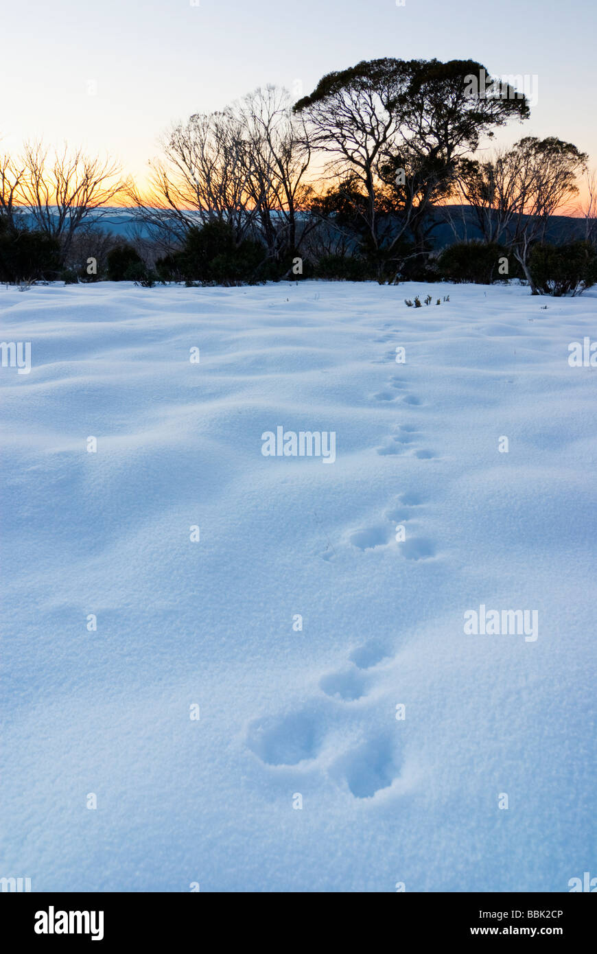 Tracks in snow at dawn Stock Photo