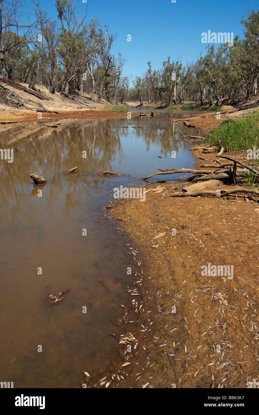 Environmental damage in Australia's Wakool River - Stock Image