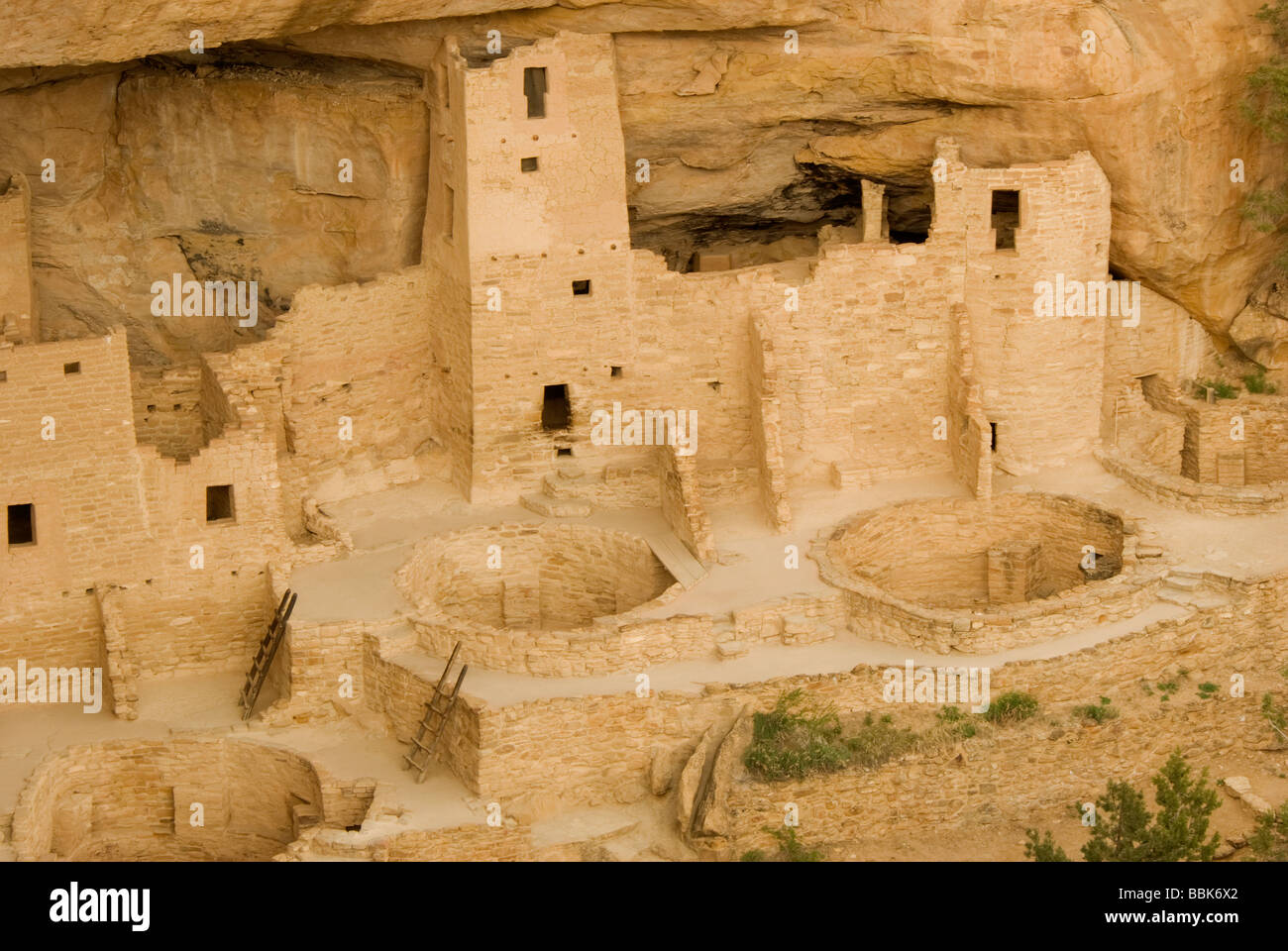 USA Colorado Cortez Mesa Verde National Park Cliff Palace 12 century ancestral puebloan cliff dwellings ruins - Stock Image