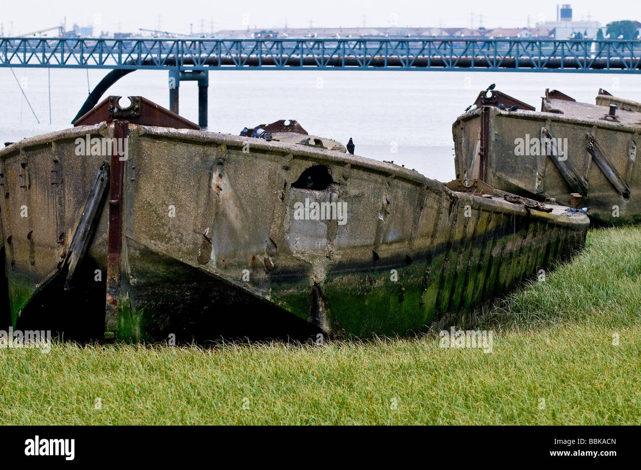 The remains of old concrete barges beached on the Essex foreshore of the Thames. - Stock Image