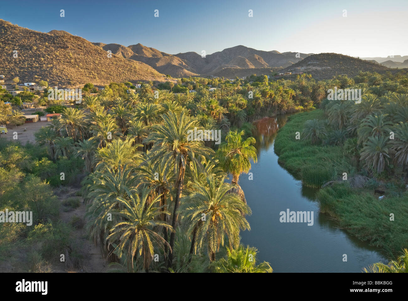Fan palms at sunset Mulege Baja California Sur Mexico Stock Photo